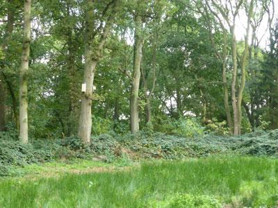 ploughman-wood