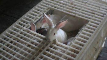 conejo (9)