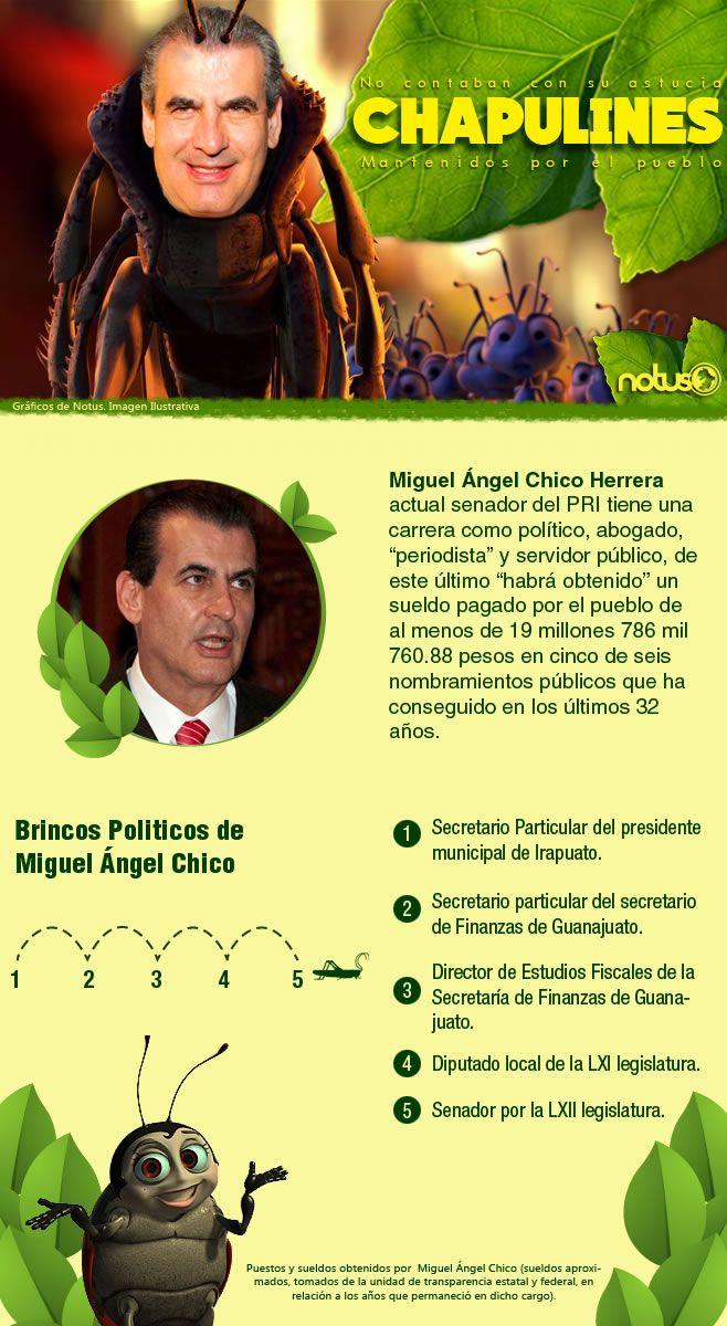Chapulines Miguel Angel Chico