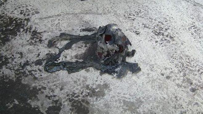 buitre_vehiculo_quemado (2)