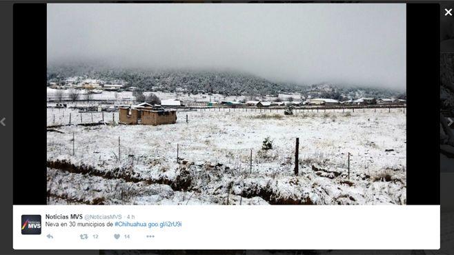 chihuahua neva (2)