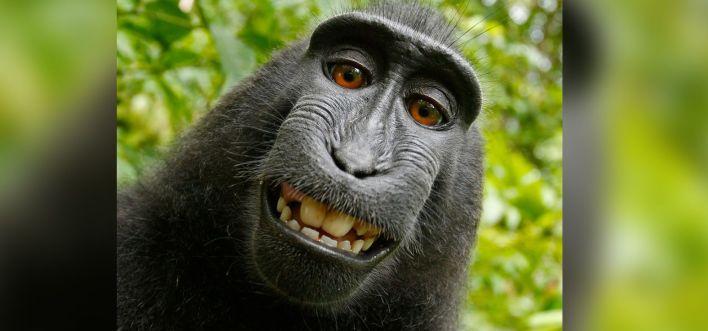 la selfie del mono