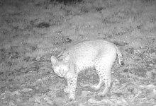 Photo of Se incrementan registros de mamíferos, aves, reptiles y anfibios en Áreas Naturales Protegidas