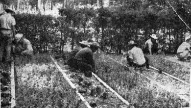 Photo of Un paseo por el tiempo… Los Viveros de Revolución