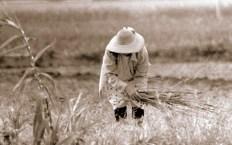 vida en el campo, Fotos juan López Luna y ADP. Fotos antiguas de Irapuato (23)