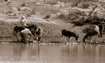 vida en el campo, Fotos juan López Luna y ADP. Fotos antiguas de Irapuato (6)