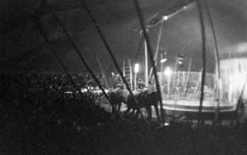 circo irapuato (19)