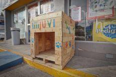 Casas para Perritos en Situación de Calle (4)