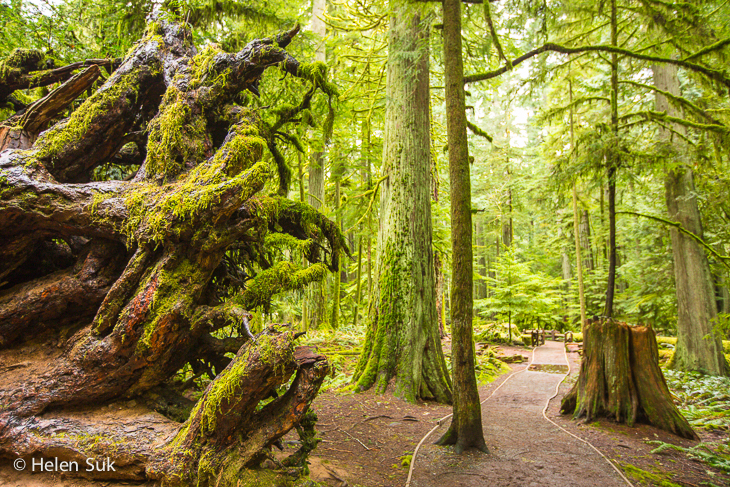 cathedral grove, vancouver island bc