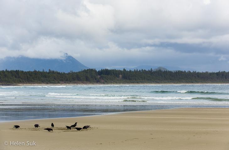 birds on an isolated beach in schooner cove bc