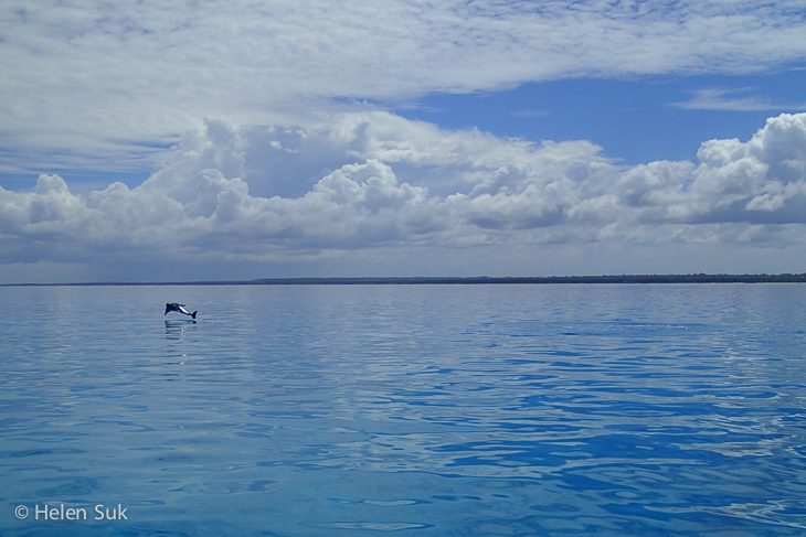 zanzibar island, dolphin, things to do in zanzibar