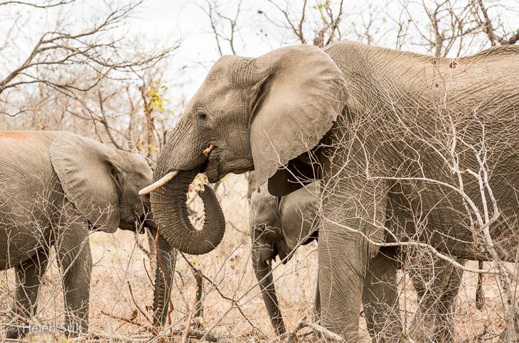 elephant sighting while on south africa safari