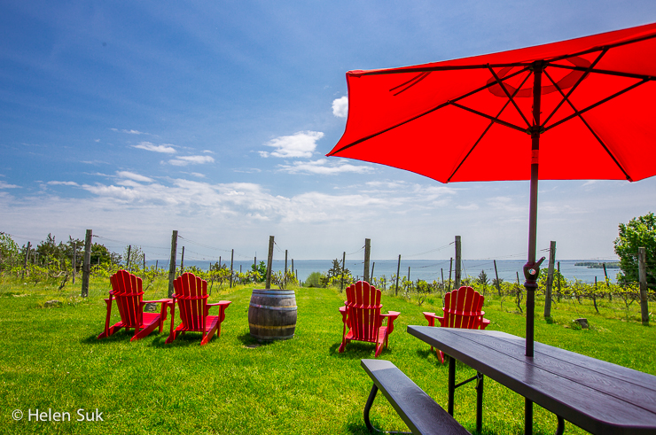 view of lake ontario from the county cider company in prince edward county
