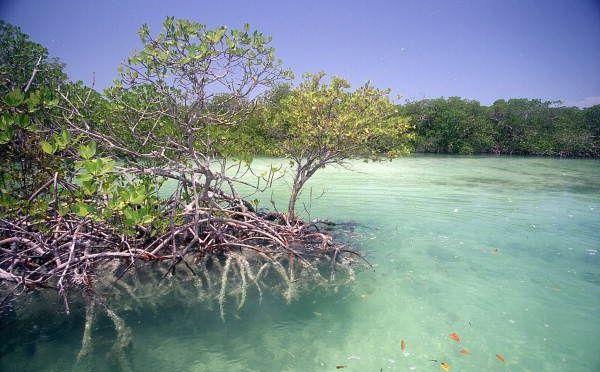 RÉCHAUFFEMENT CLIMATIQUE ET MANGROVE : MISSION SCIENTIFIQUE À OUVÉA