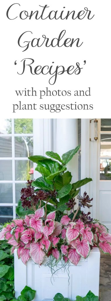 'Recipes' to help you create stunning container gardens. Beautiful images and detailed 'recipes' including specific plants for several container gardens.