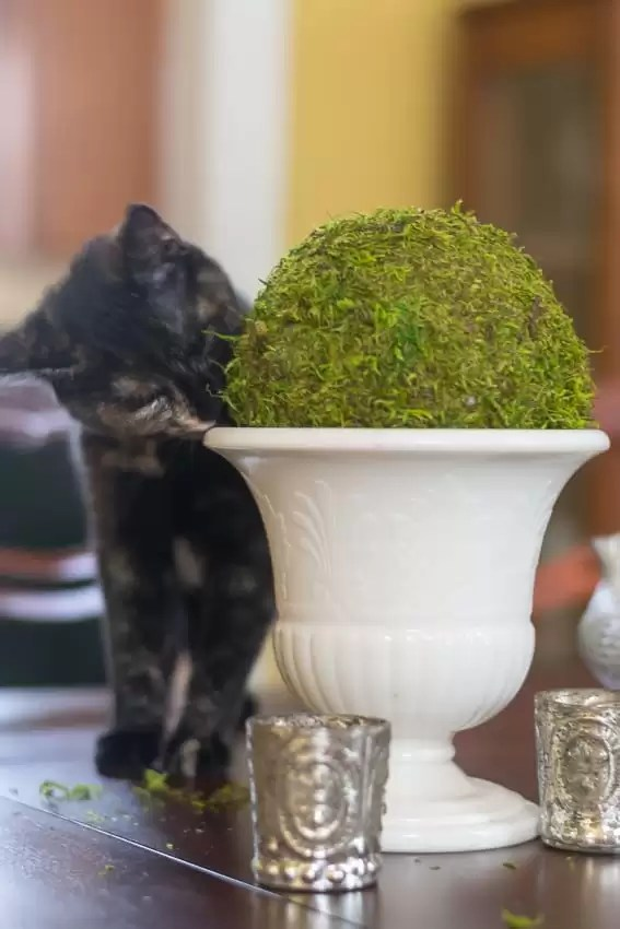 Confounded by trying to wrap a square sheet of moss around a round object? Me too! These moss balls are a great DIY craft idea for your Spring and Summer home decor.