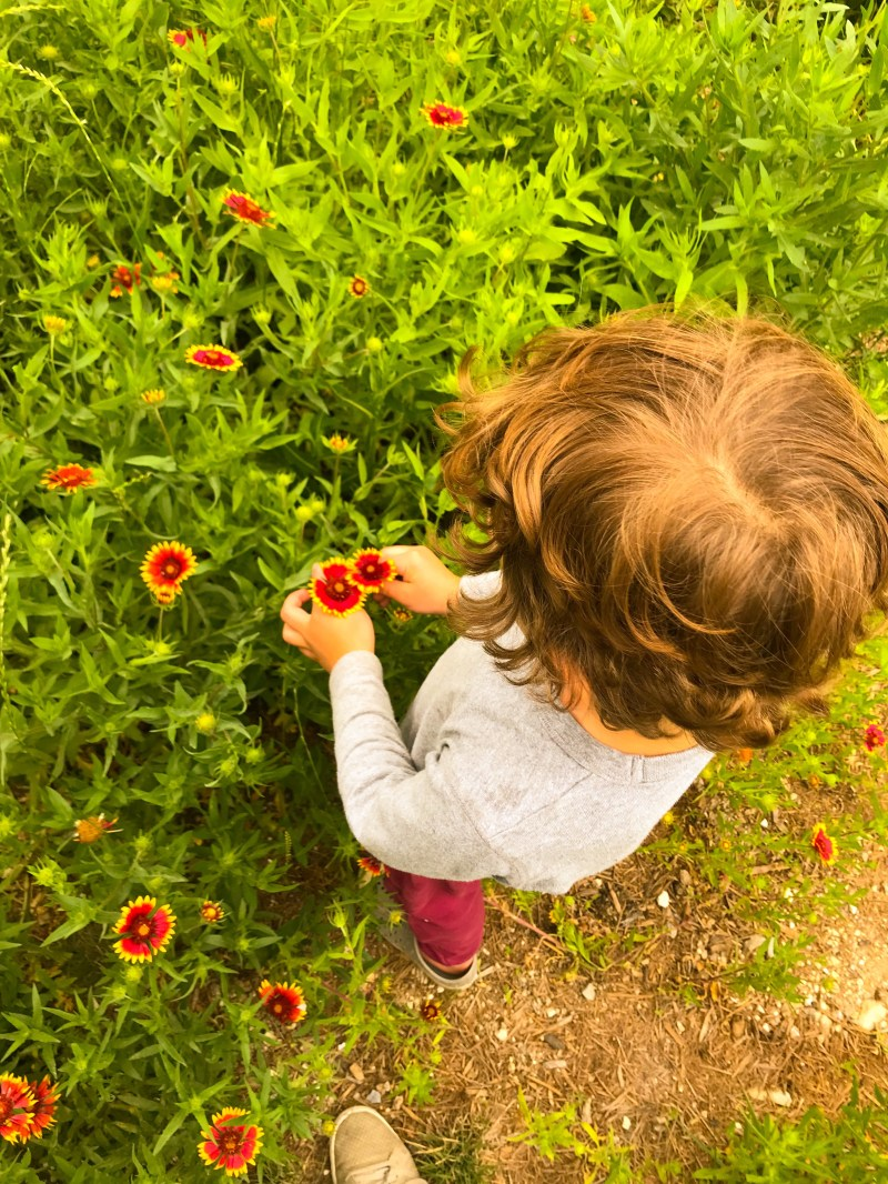 Observing Flowers