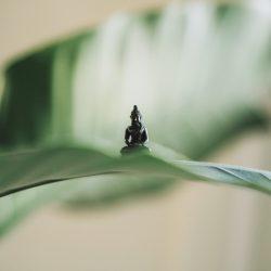 buddhist mindfulness