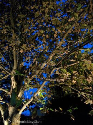 IMG_20140421_174930-p365d111-tree-night