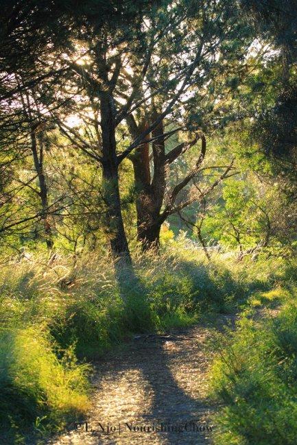 sunlit path, nature trail, park