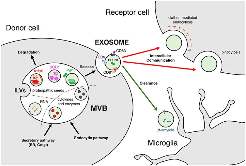exosomes communication