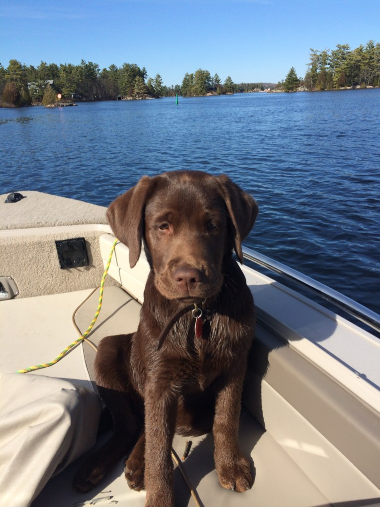Cocoa puppy, 4 months old & loving the lake life!