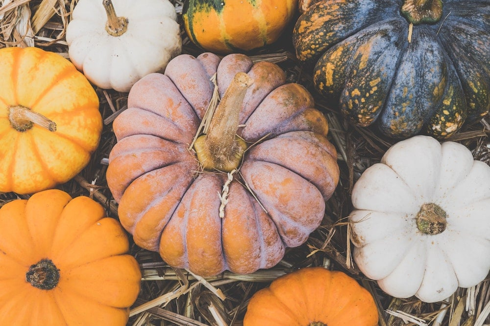 Fall Wellness Tips Inspired by the Wisdom of Ayurveda