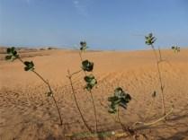 desert2-png