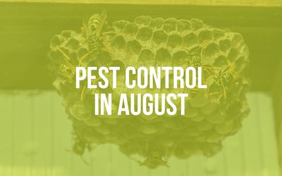 Pest Control in August