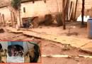 Canil clandestino com quase 30 cães em situação de maus-tratos é descoberto em Sales Oliveira