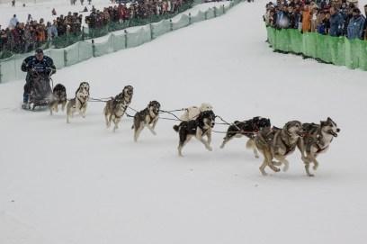 Schlittenhunderennen Februar 2006 (19 von 26)