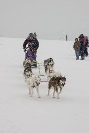 Schlittenhunderennen Februar 2006 (20 von 26)