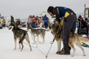 Schlittenhunderennen Februar 2006 (3 von 26)