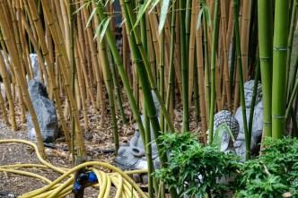 Bambus-Impressionen_170606_4_10