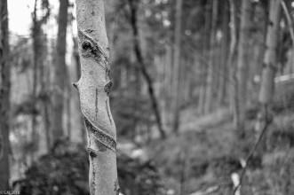 Friederike im Beusterwald_180121_16