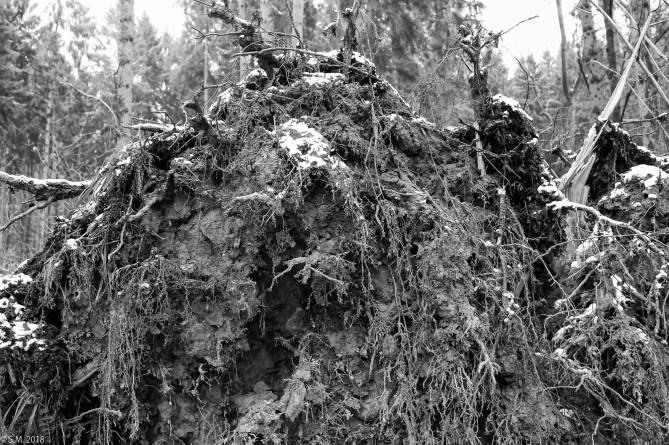 Friederike im Beusterwald_180121_2