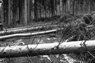 Friederike im Beusterwald_180121_4