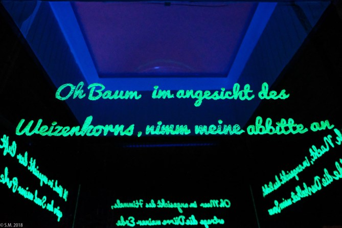 EVI-Lichtungen_180128_703