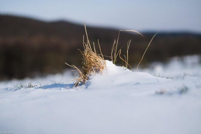 Beuster_Winter (10 von 26)
