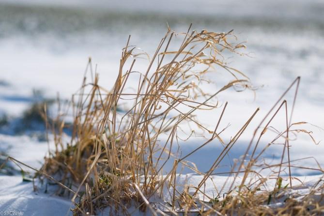 Beuster_Winter (16 von 26)