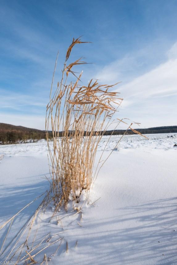 Beuster_Winter (5 von 26)