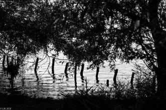 Koldinger See (12 von 29)