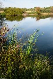 Koldinger See (6 von 29)