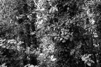 Wrisbergholzen (13 von 58)