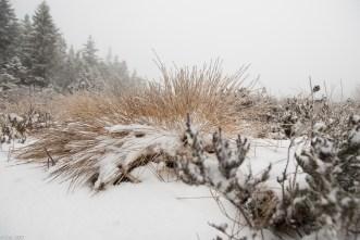 Schnee im Hochmoor (13 von 15)