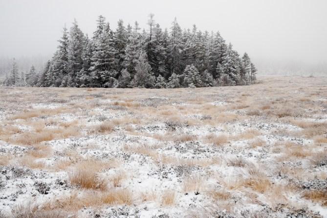 Schnee im Hochmoor (2 von 15)