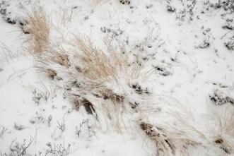 Schnee im Hochmoor (3 von 15)