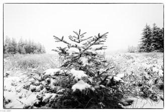 Schnee im Hochmoor (6 von 15)