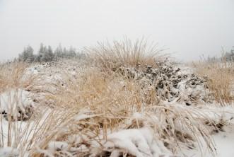 Schnee im Hochmoor (7 von 15)