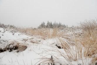 Schnee im Hochmoor (8 von 15)